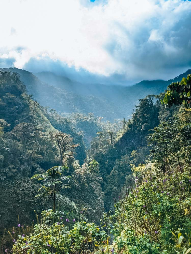 The view over the surrounding rainforest from the first Catarata del Toro viewpoint