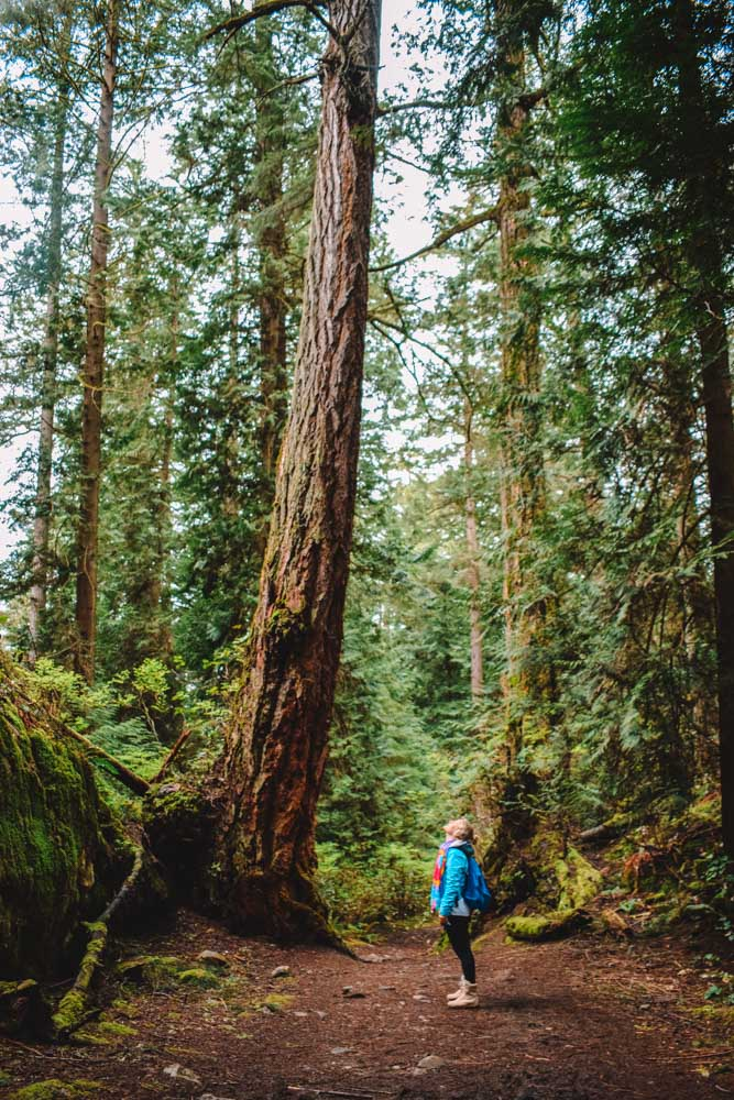 Exploring the woods in Deep Cove, on the outskirts of Vancouver