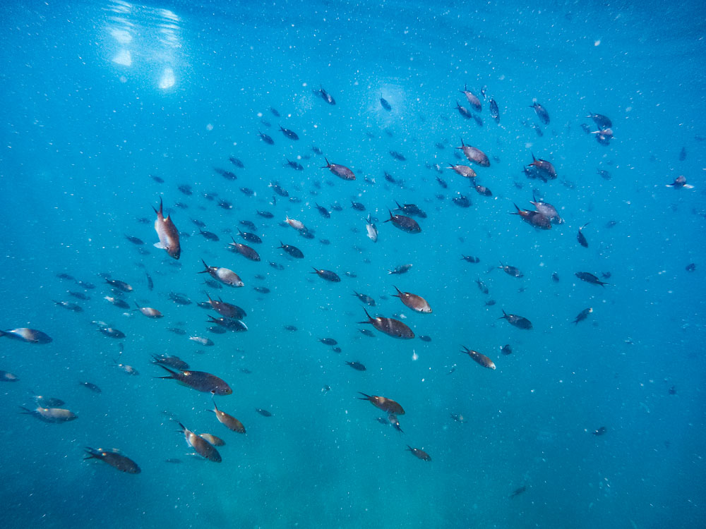 Some of the fish we saw while snorkelling in Isla Tortuga