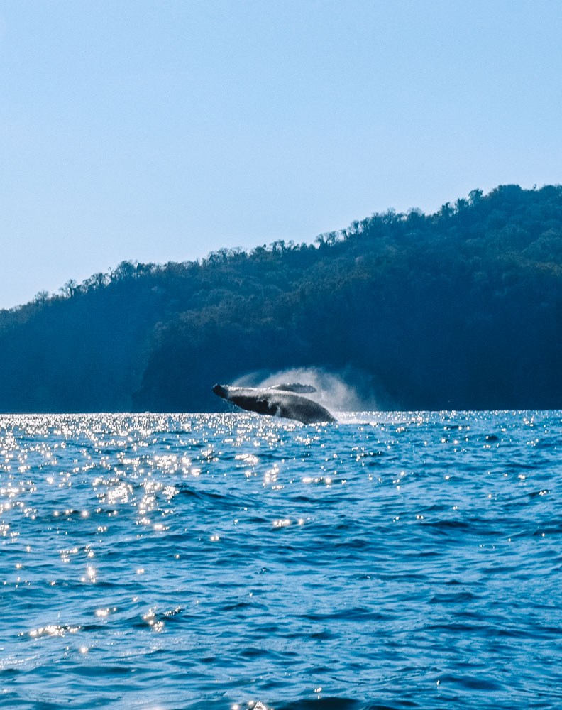 The whale we spotted while sailing to Isla Tortuga from Montezuma