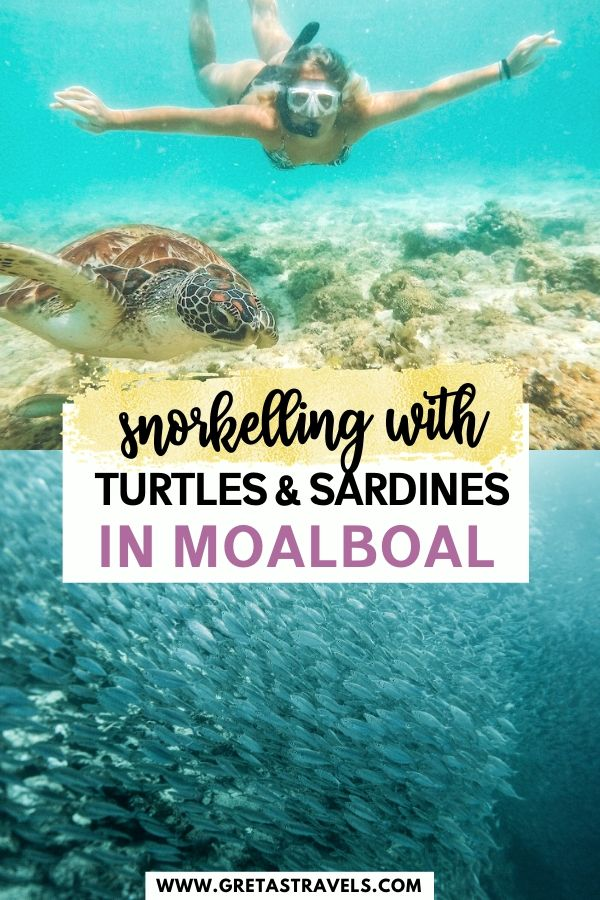 """Collage of a girl snorkelling with a turtle and a shoal of sardines with text overlay saying """"snorkelling with turtles & sardines in Moalboal"""""""