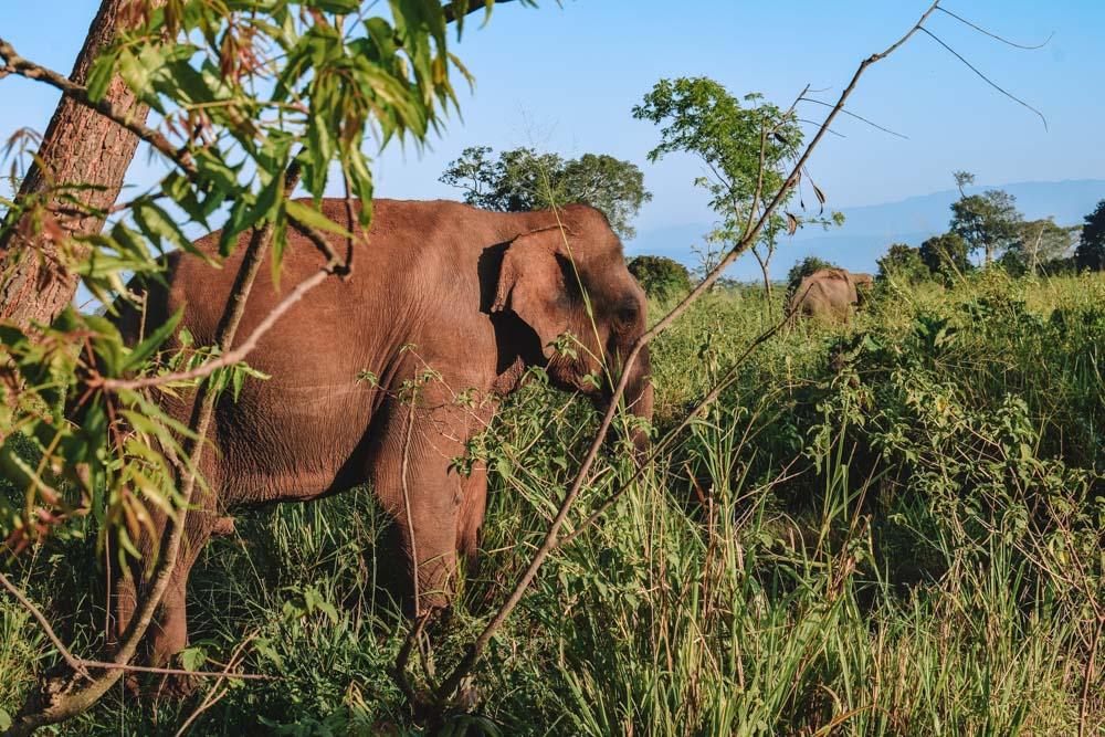 The elephants we spotted before even entering Udawalawe National Park
