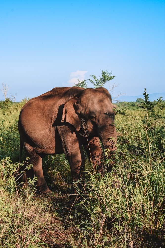 The elephant we saw before even entering Udawalawe National Park