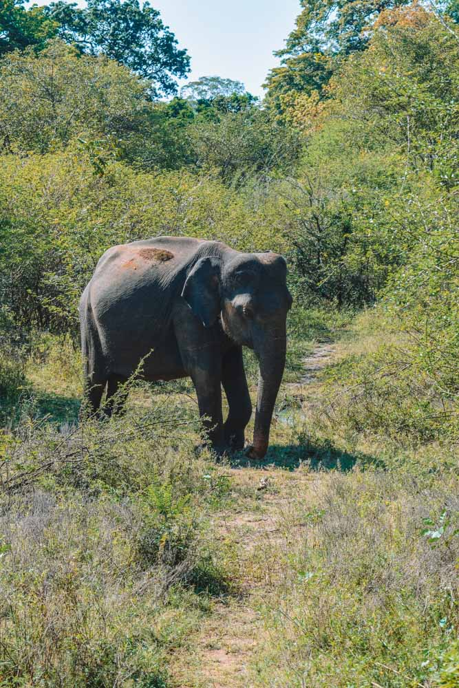 A young elephant we spotted in Udawalawe