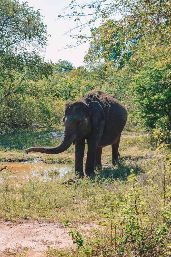 Exploring Udawalawe National Park during our elephant safari in Sri Lanka