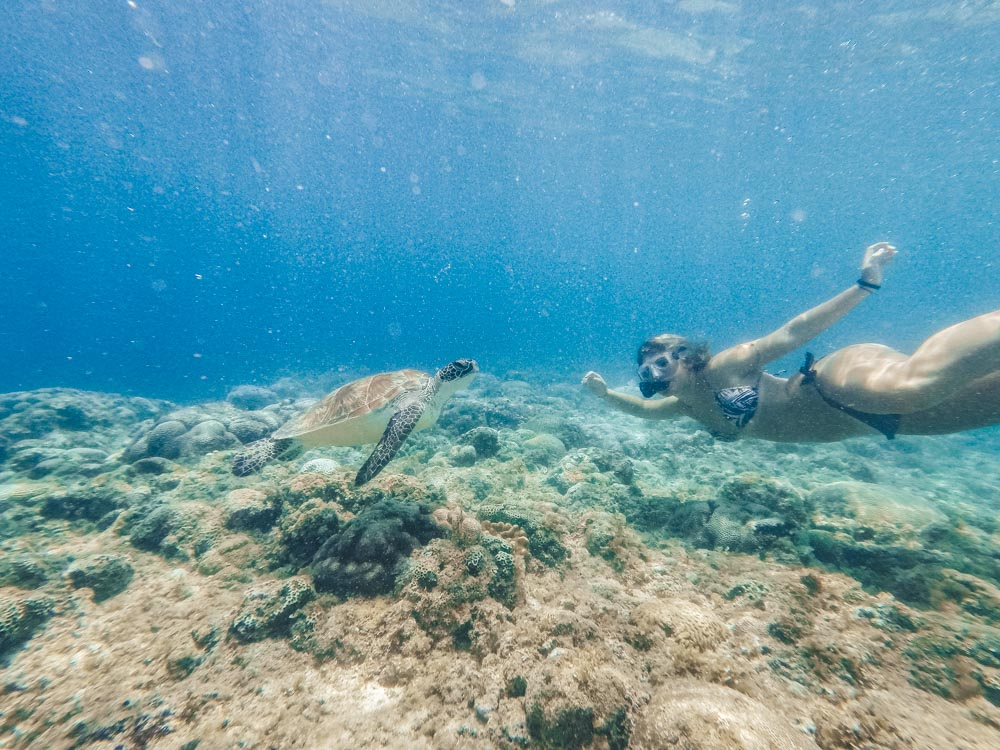 Snorkelling with turtles in Moalboal
