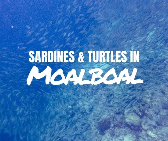 Sardine run and turtles in Moalboal, Cebu Island