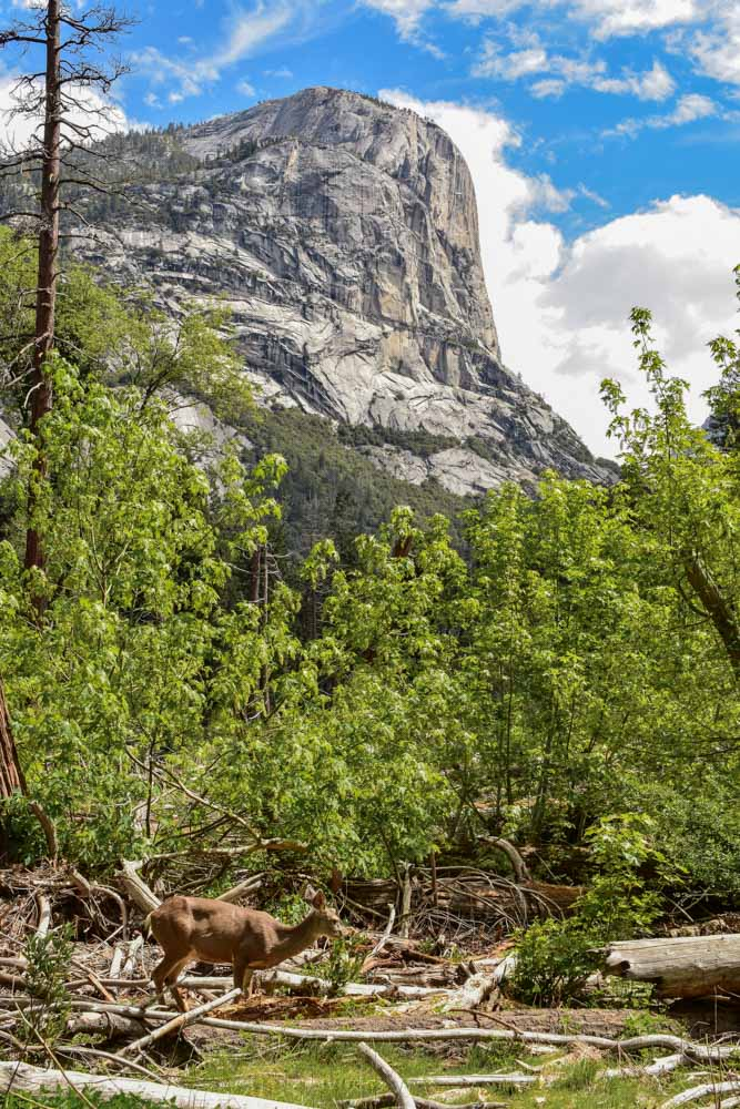Hiking along the Snow Creek Hike in Yosemite, photo by Bartender Abroad