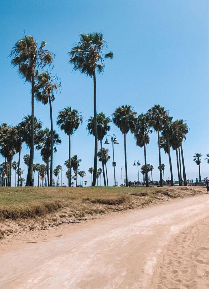 Iconic LA palm trees