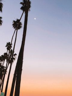 Palm tree silhouettes at sunset in Santa Barbara - photo by Passports and Preemies