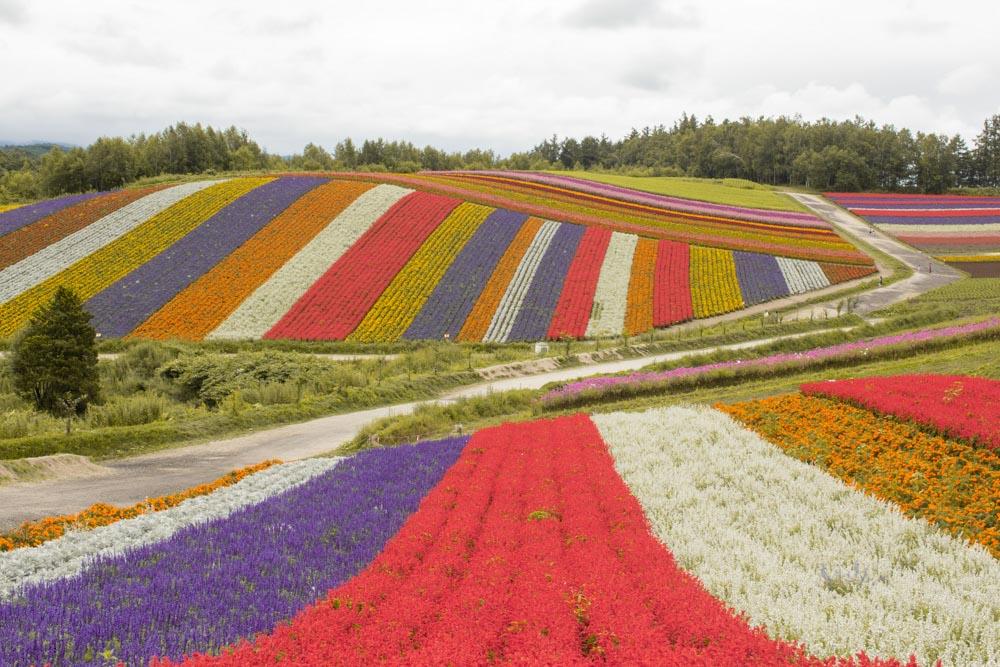 Shikisai no Oka flower Fields in Hokkaido - photo by The Wandering Suitcase