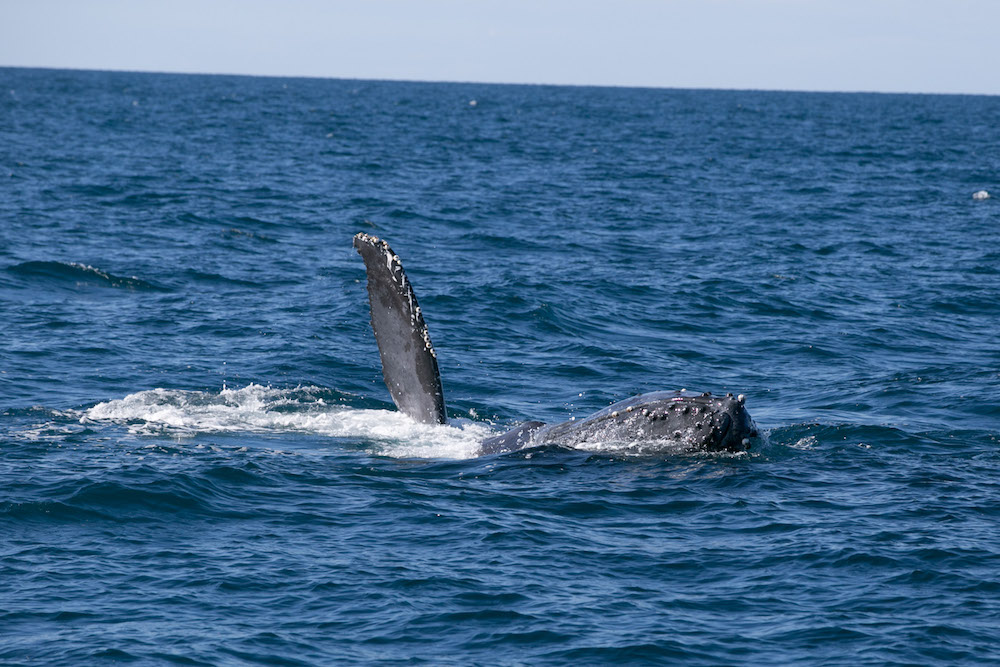 Spotting whales during our whale watching tour -Photo by Matt Hardy on Scopio