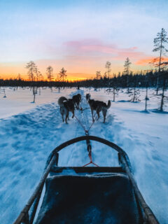 Doing a husky dog sled tour in Yllas, Lapland