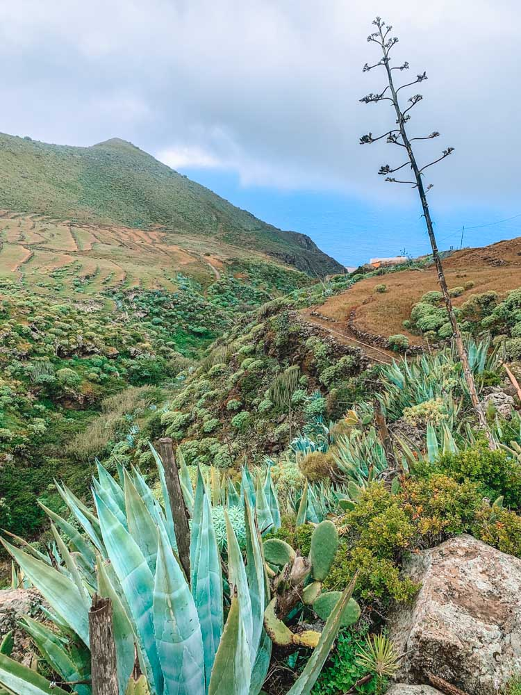 Some of the views during our Punta de Teno hike